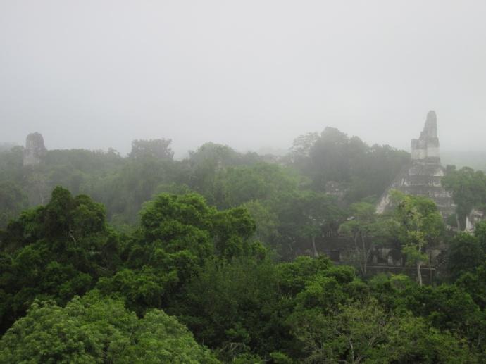 Blick über den Regenwald