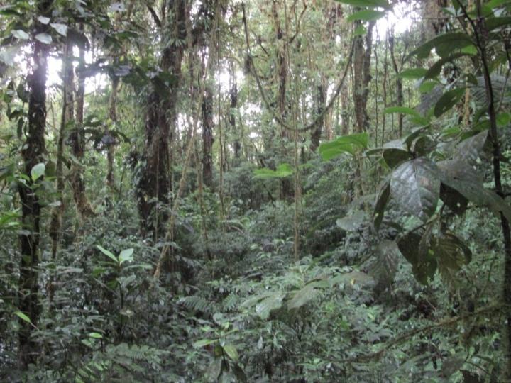 Dschungelfeeling in Santa Elena