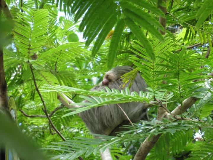Thomas in den Bäumen am Dorfplatz