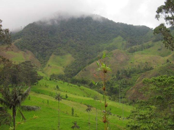 Landschaft im Valle Cocora