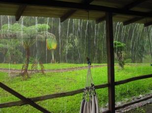 Regen im Regenwald