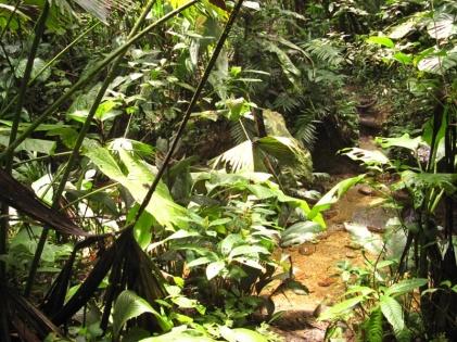 Selva Viva