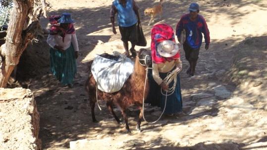 Indigena am Lago Titicaca