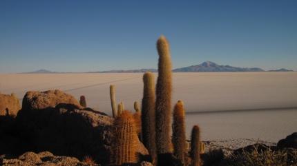Kakteenenfelsen in der Salzwüste