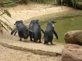 Süße Pinguinenparade