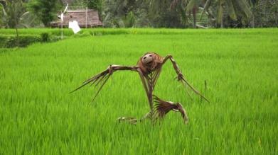 Bewacht Reisfelder