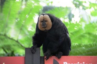 Zoo Singapore - Einer von Vielen
