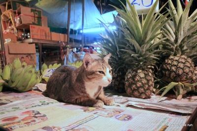 Mieze auf dem Blumenmarkt in Bangkok