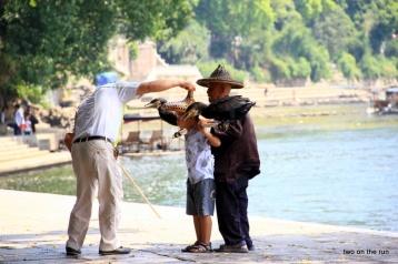 Da muss jeder Chinese durch wenn er GROß werden will - Kormorane eines Fischers in Yangshou beim Fotoshooting