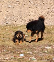 Sie haben sich lieb...auf dem Weg zum Namtso Lake