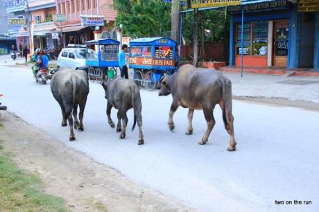 In Pokhara