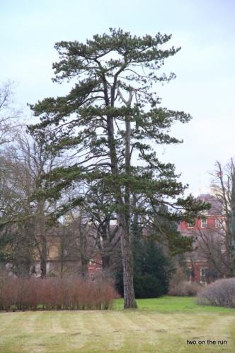 Lieblingsbaum von Thomas