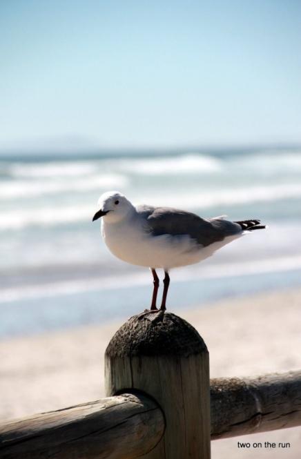 Das Vögelchen schaute dabei zu
