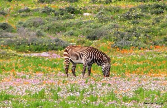 Langebaan: West Coast National Park