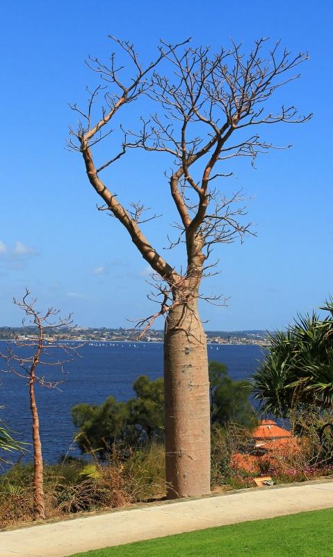 auch Angies Lieblingsbaum