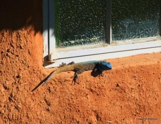 Swaziland - Sonnenanbeter