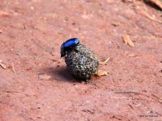 Swaziland - Kleine Wanderung Voll Scheiße