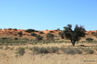 Im Kgalagadi Transfrontier Park