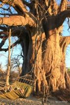 Baobab und Angie
