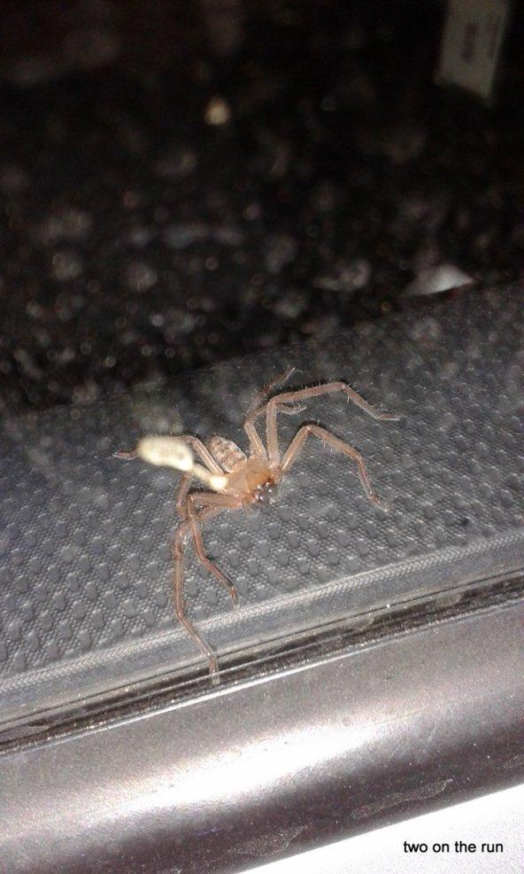 so was von gefährlich in Australien... vergessener Fahrgast bei Angie auf Arbeit