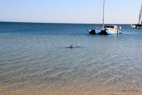 Unterwegs mit Alex und Wolfgang in Western Australia - Kalbarri NP - Delfine in Monkey Mia