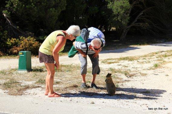 Unterwegs mit Hansi und Evi - Rottnest Island - Quokka