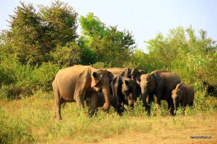 Sri Lanka - Udawalawe-Nationalpark