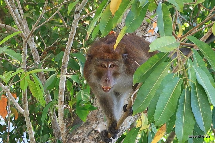 El Nido - Nachbar im Baum