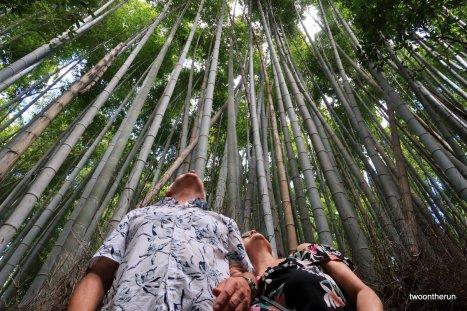 Kyoto - Arashiyama bamboo grove